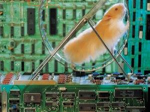 SOE Server Hamster