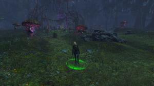 Shadowy Forest is Shadowy