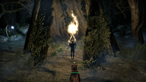 Lighting a fire inside a sentient tree somehow endears me to said tree?  Not sure how that works, but ok. . .